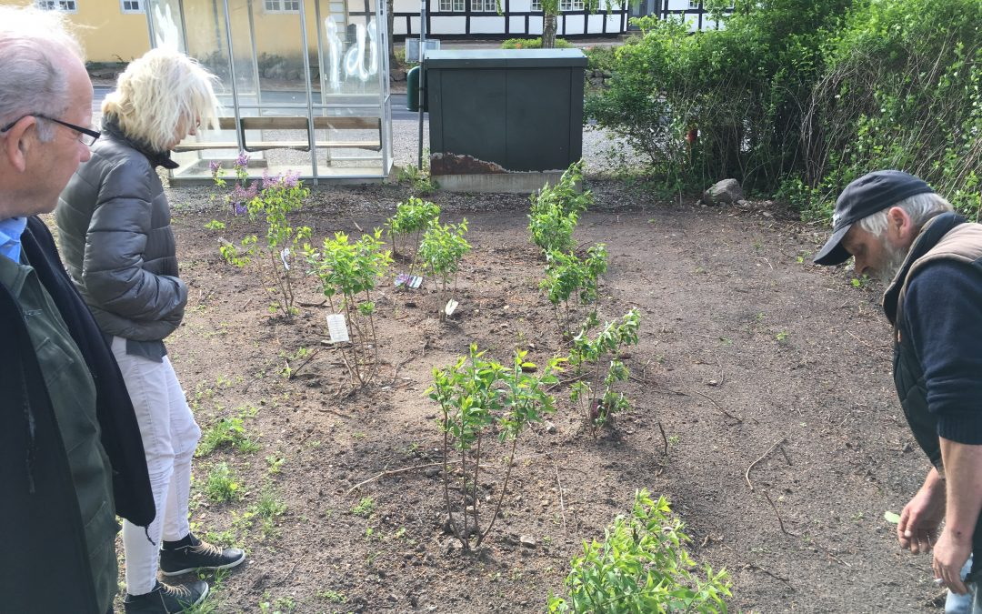 Se vores planteskole med syrener